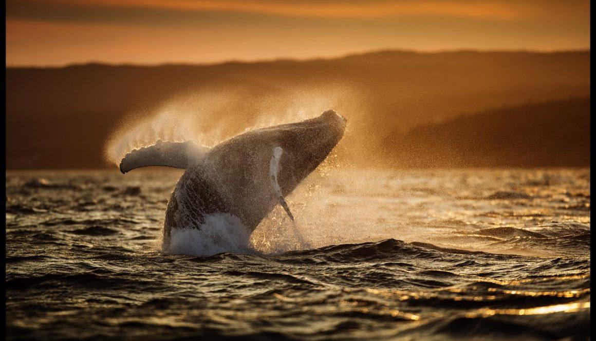 whale sun 1